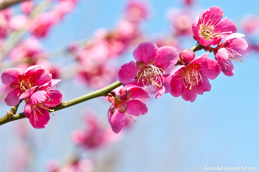 Spring Blooms by amrodel