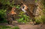 Playful Tiger Cubs