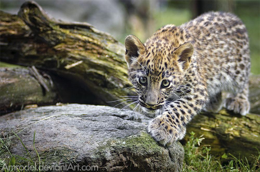 Lil' Hunter by amrodel