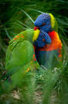 Parrot Hug