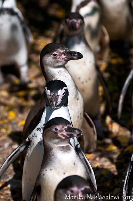 Penguins in Queue