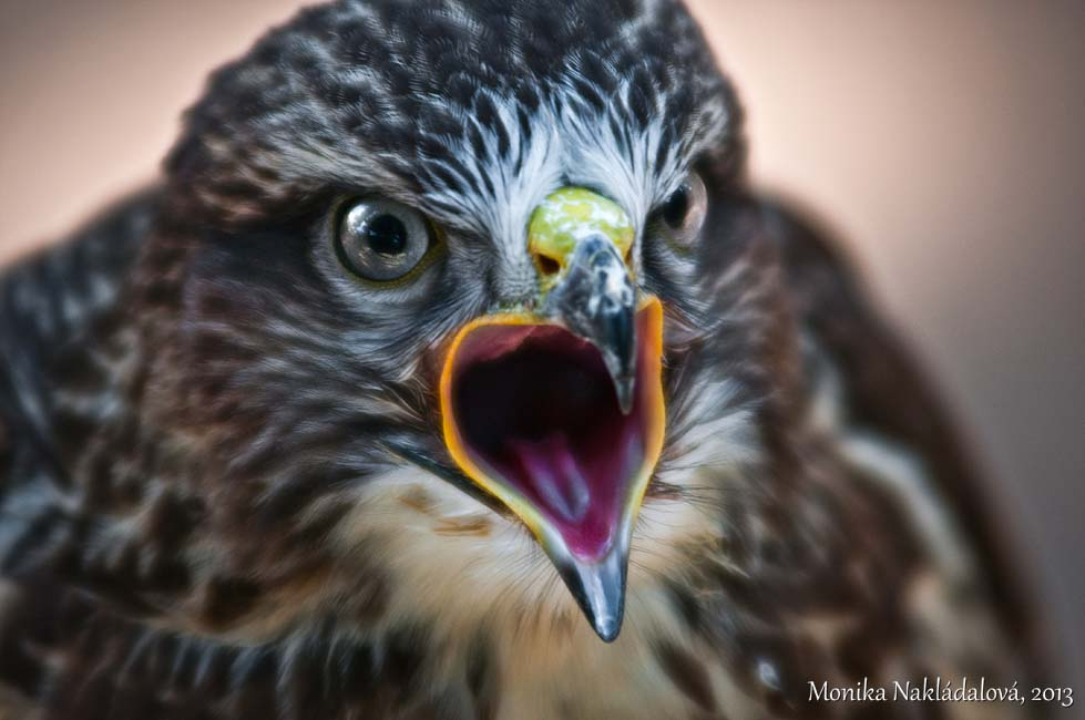 Angry Bird by amrodel