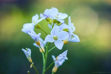 Garden Flower II by amrodel