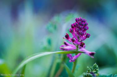 Garden Flower III by amrodel