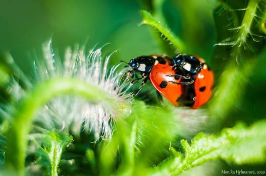 Cuddly Ladybugs