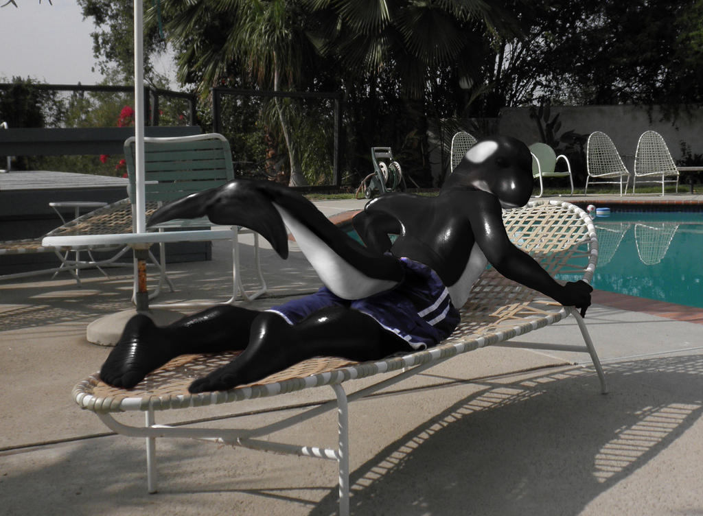 Orca Sunbather by pythos-cheetah