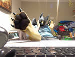 Griffin Paw