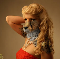 Glamour Cat