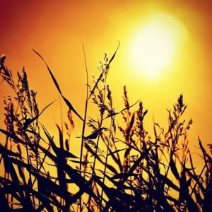 the-fatal-sun's Profile Picture