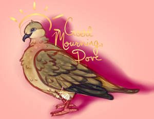 Mourning, dove