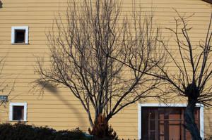 Tree by anacondakamil
