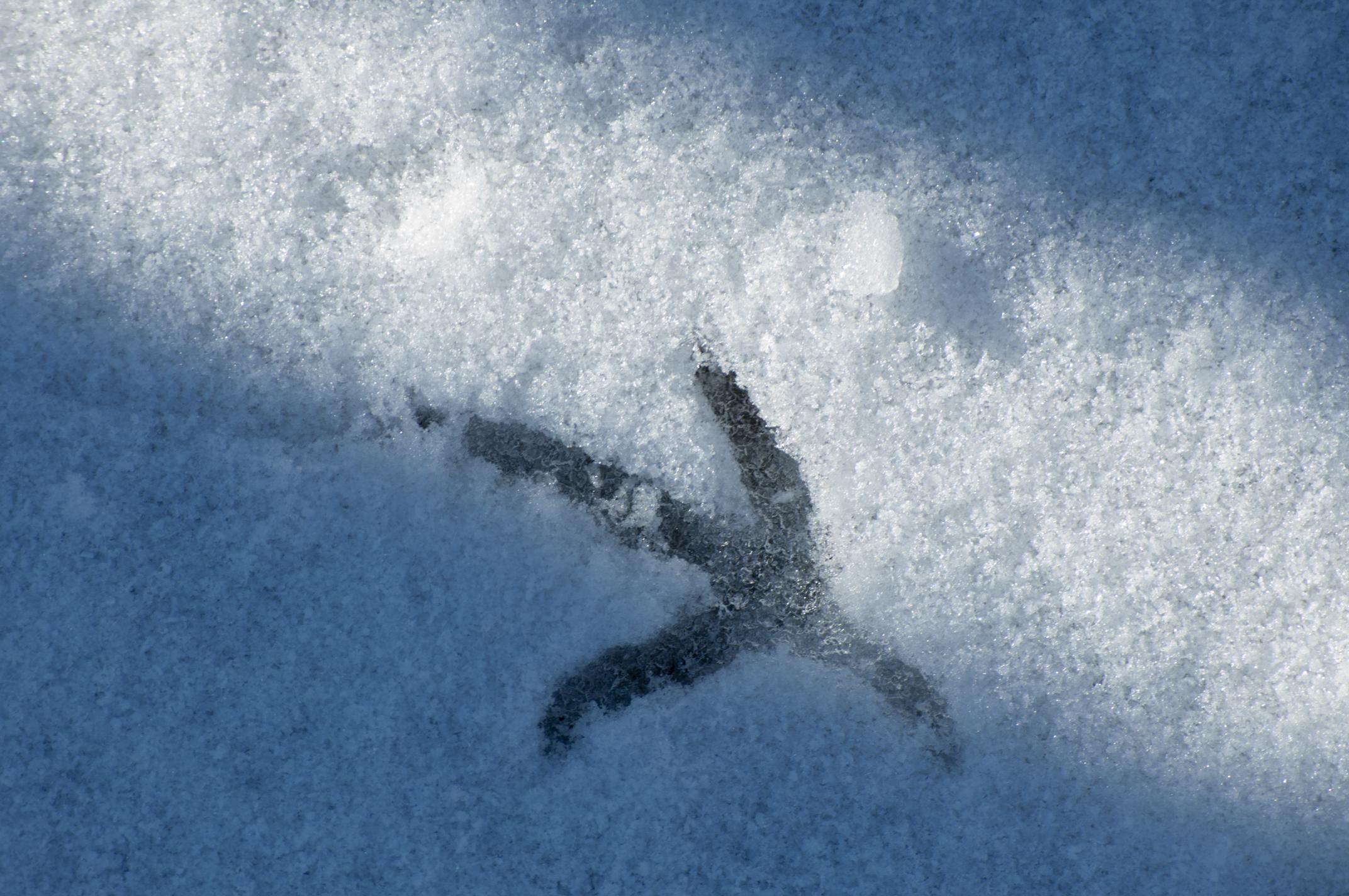 footprint by anacondakamil