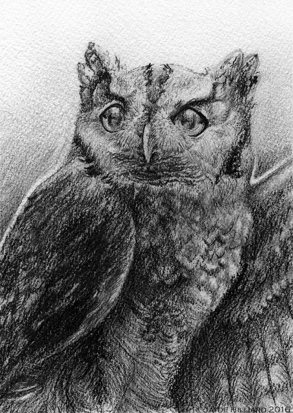 November 2016 Birdwhisperer - Eastern Screech Owl by redrevvy