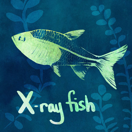 X is for x ray fish by greenteaceremony on deviantart for X ray fish