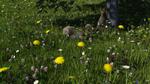 Clover Field by jhmart1