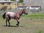 Horse stock 20