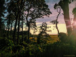 Sunset Marsh 01
