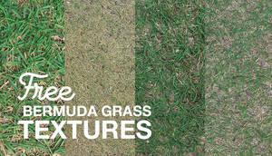 Free Bermuda Grass Textures by NaldzGraphics
