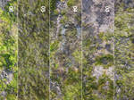 Free Moss Textures