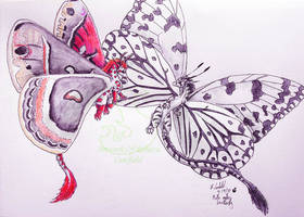 Moth meets butterfly by chaosia