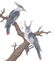 Corvus Cornutus by chaosia