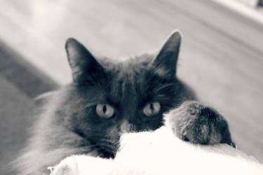Meow by gretukou