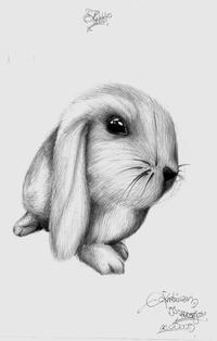 rabbit by redjay