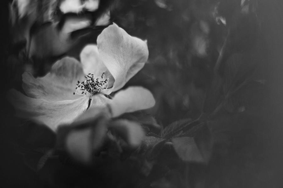 flower? by chillione