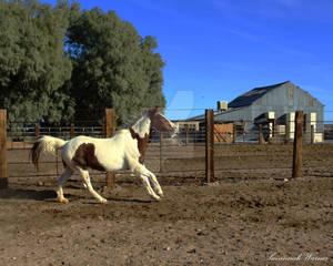 Mustang Molly