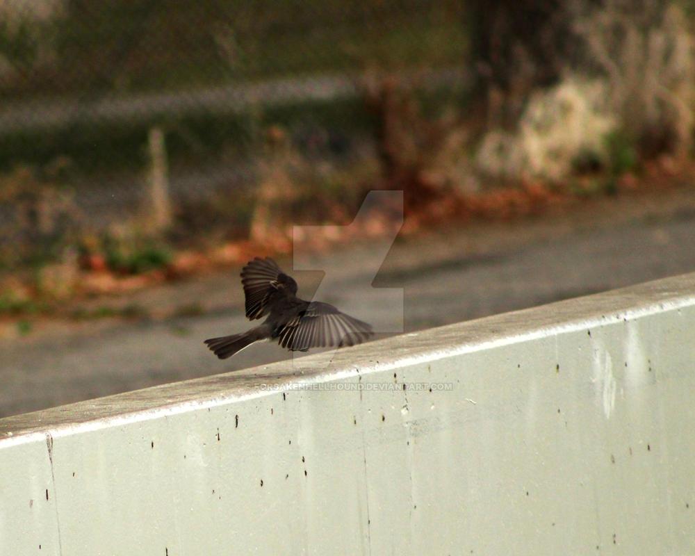 Flutter by ForsakenHellhound