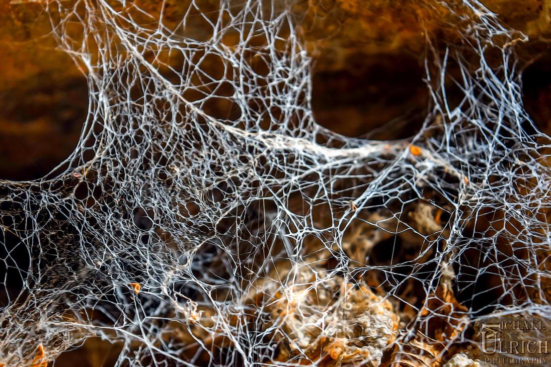 Spinnenreich by schiller142