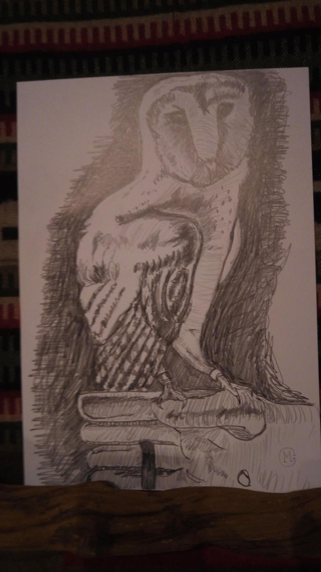owl by tarotribe