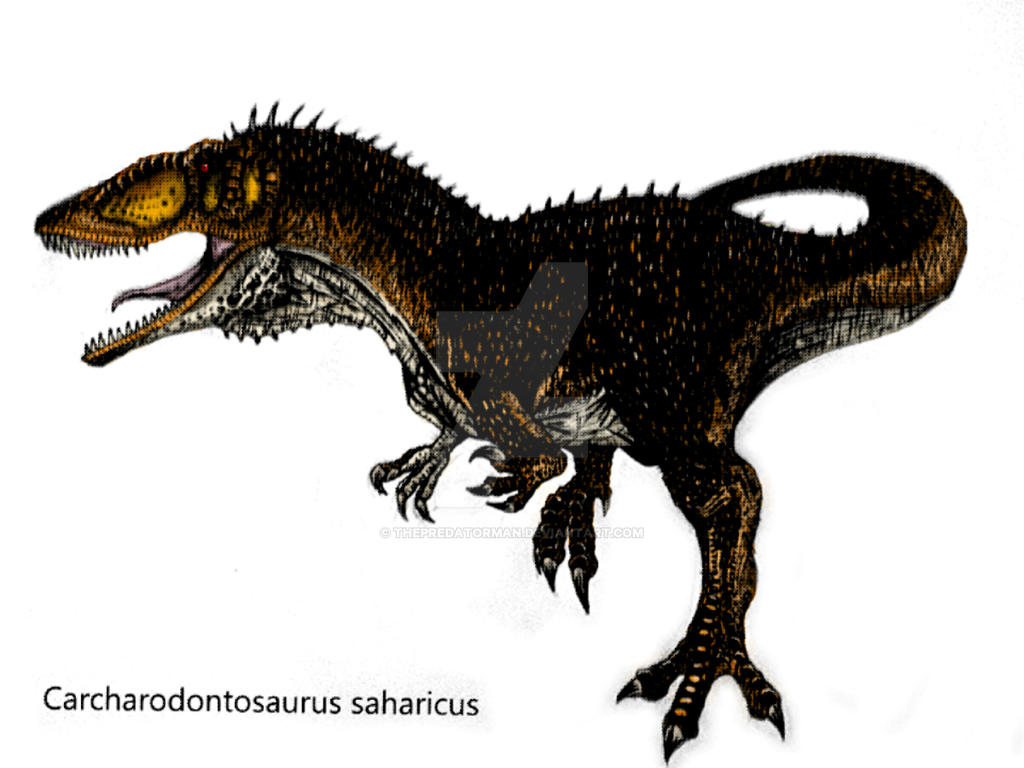 Carcharodontosaurus saharicus (Coloured) by ThePredatorMan