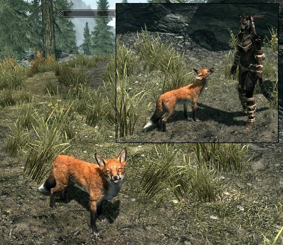 Skyrim Mod: Fox Texture by KayFedewa on DeviantArt