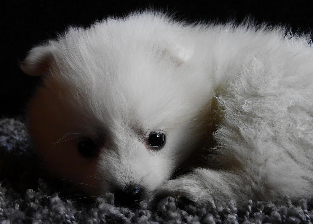 Puppy by kaitengiri