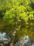 Der Horizontale Baum