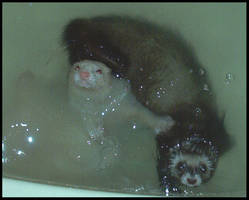 ferret bath time by angelicanita