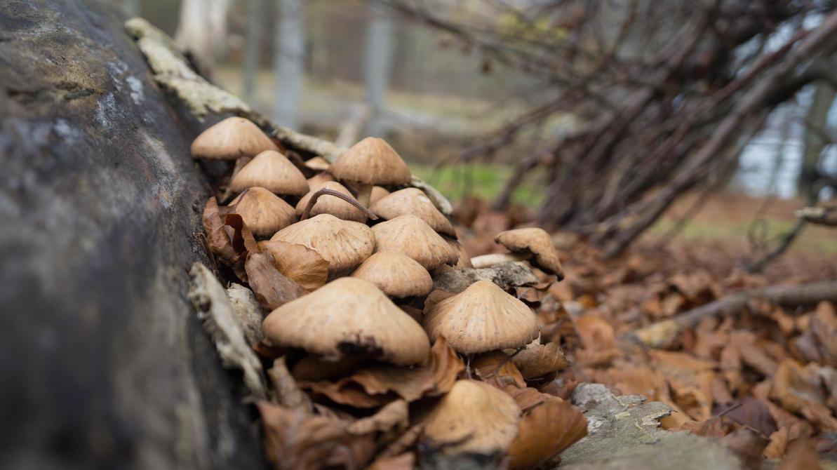 Fungi by Chunniboy