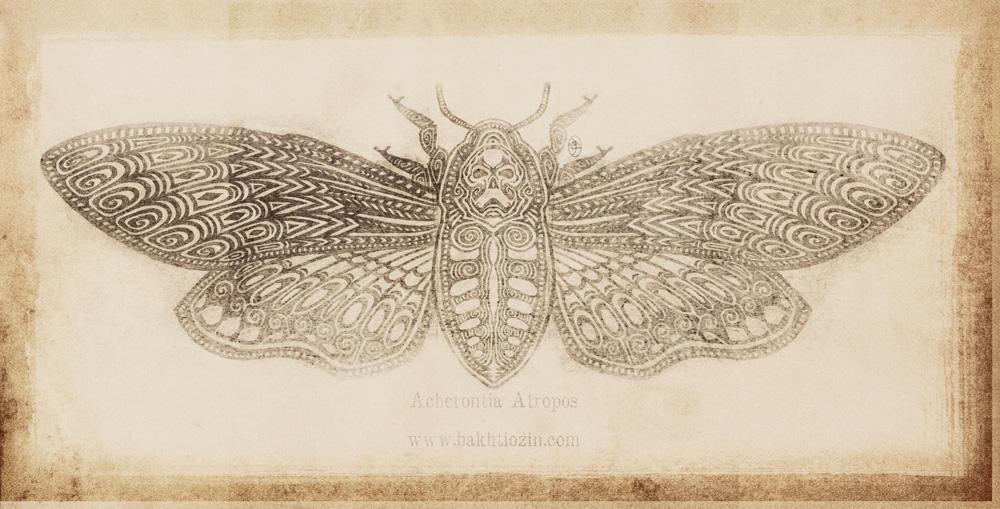 ACHERONTIA ATROPOS by ABakhtiozin