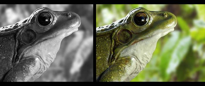Frog / wip