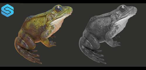 Frog Final Rendering