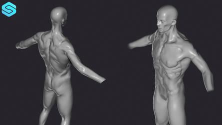 Zbrush anatomy