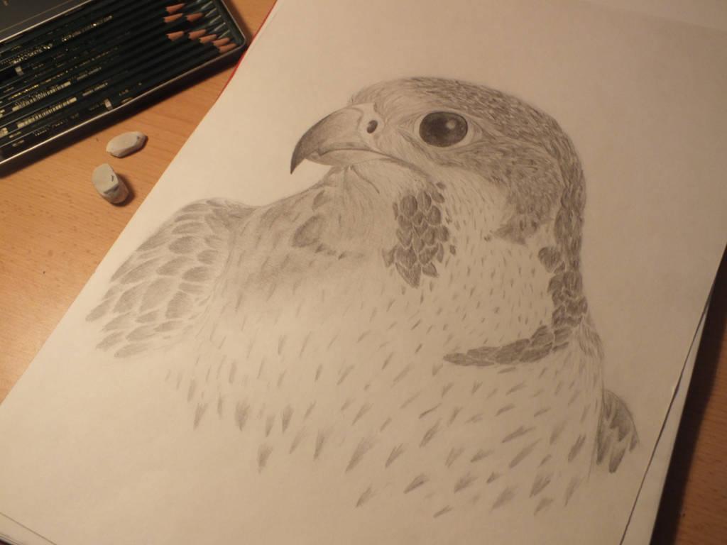 Falcon by XxRakichixX