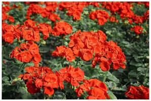 flowers 03 by almonsor-stock