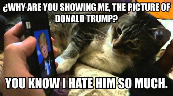 Cat Hates Donald Trump By Araceli193 On Deviantart