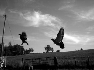 movement by Akelamoonstone