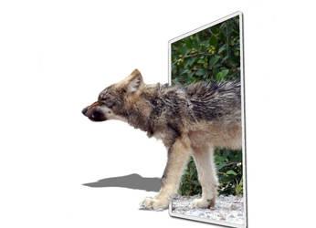 wolf 3D by titedrine