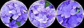 F2U|Decor|Lilac #3 by Mairu-Doggy