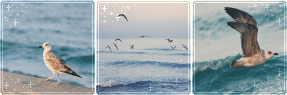 F2U|Decor|Sea Birds by Mairu-Doggy