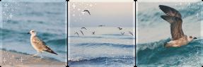 F2U Decor Sea Birds by Mairu-Doggy